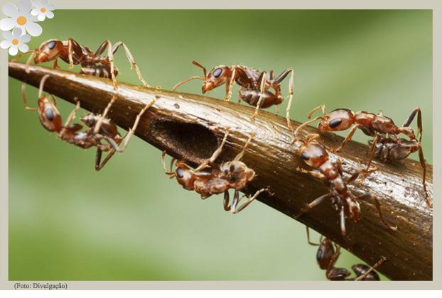 Dicas de como eliminar, acabar e matar formigas