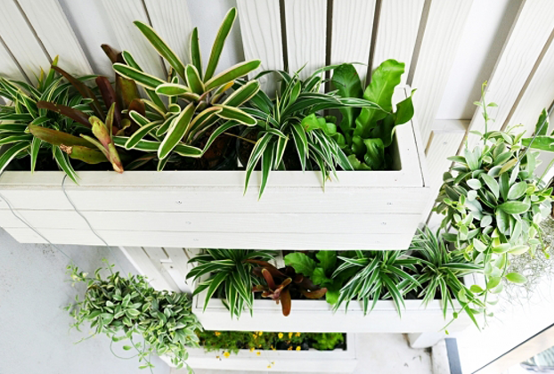 jardim vertical externo:dica de hoje é como um jardim vertical deixa o seu ambiente externo