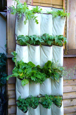 sapateira-de-porta-jardim