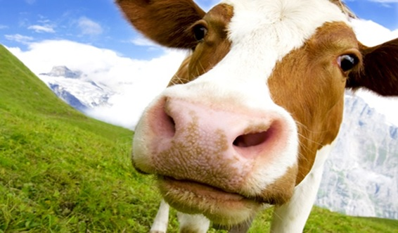 Intolerância à lactose X Alergia ao leite