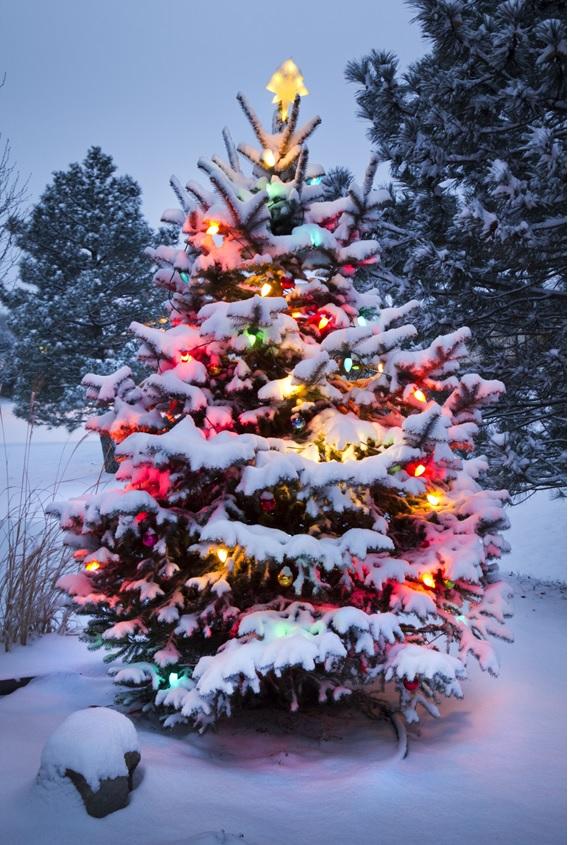 Como decorar sua árvore de Natal
