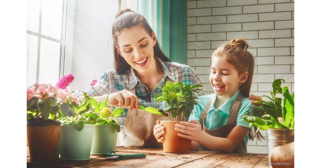 Quais os benefícios de ter plantas dentro de casa?